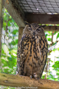The owl cooperated nicely for a long while, even winking at me -- or his eye itched.